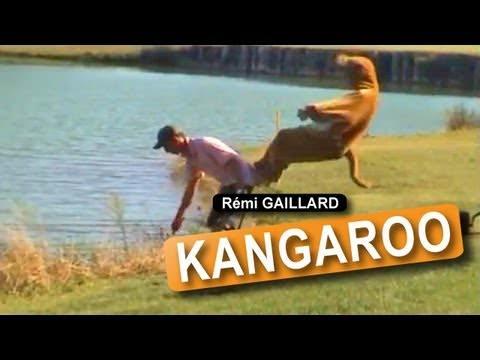 Kangaroo (R�mi GAILLARD)